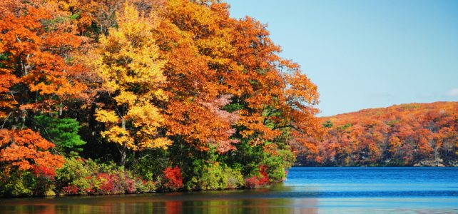 riverfront foliage